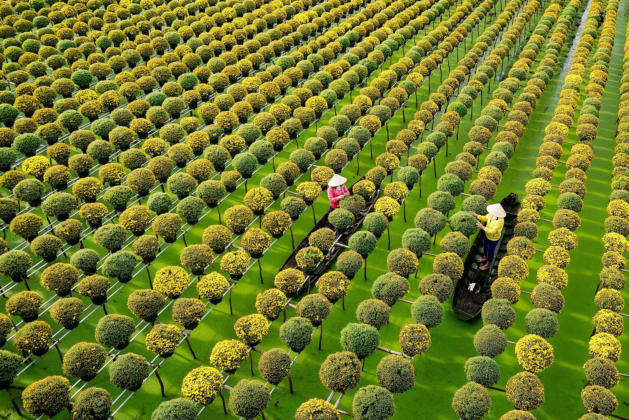 Tỉnh Đồng Tháp nổi danh với làng hoa Sa Đéc