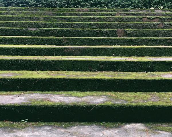 Rễ rong rêu bám sâu gây ảnh hưởng tới kết cấu công trình